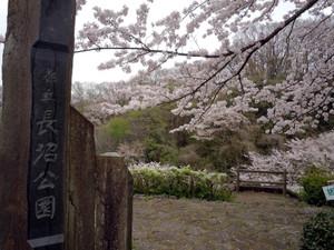 Sakura20153_4